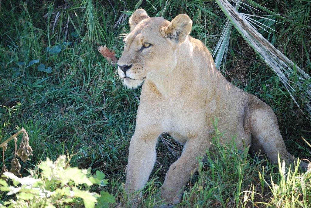 trip to Botswana