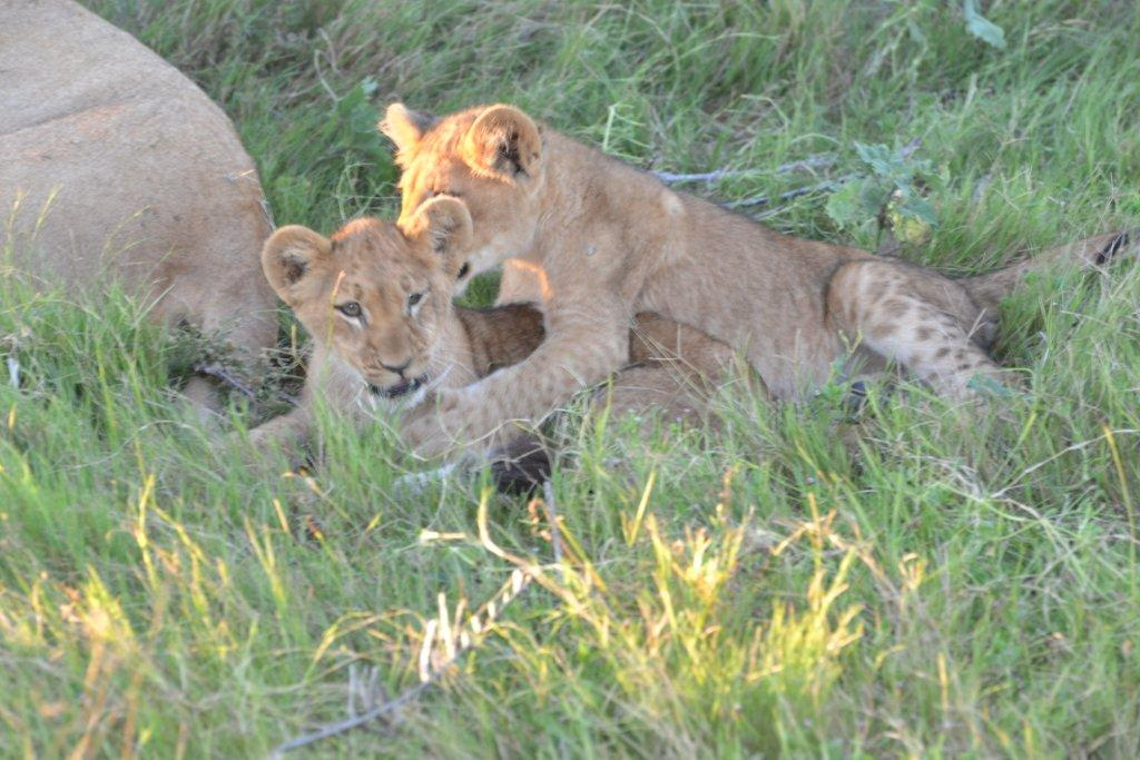 Botswana honeymoon safari