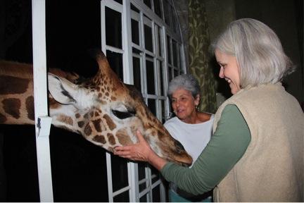 giraffe manor kenya