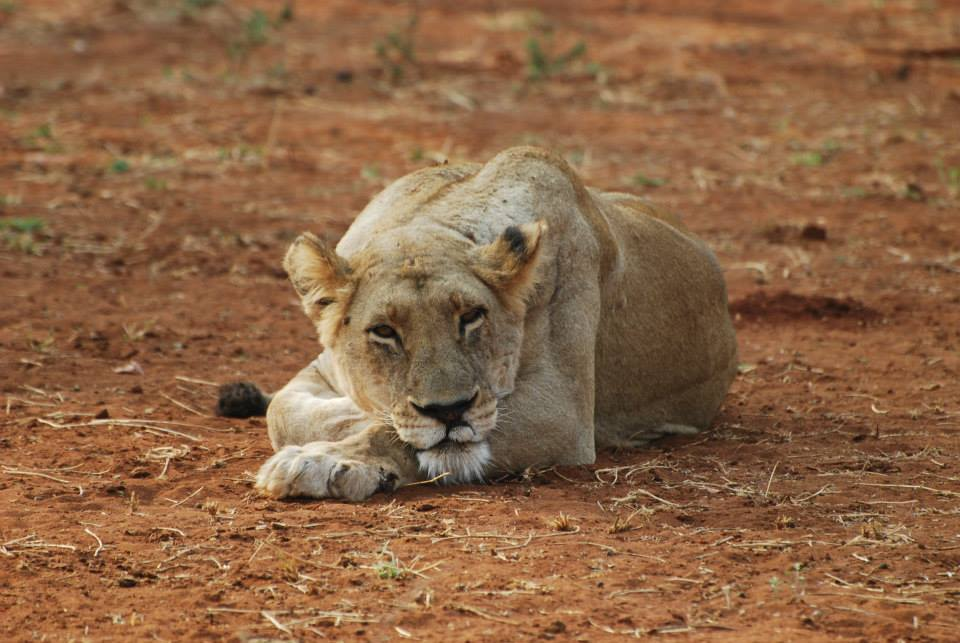 Zimbabwe safari vacation