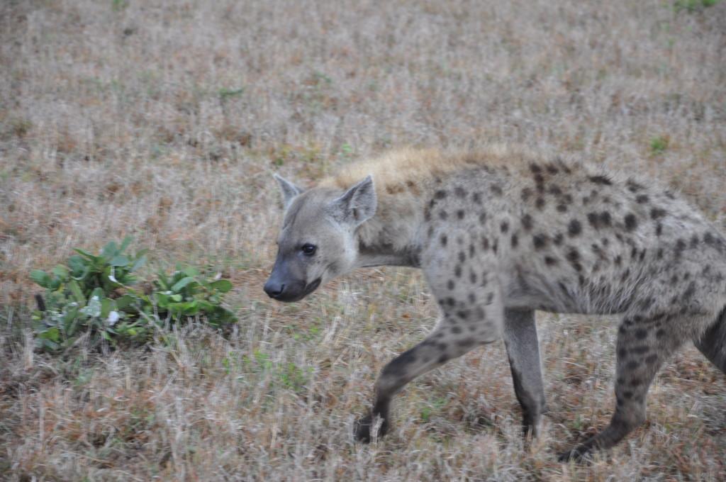 South Africa safari tours