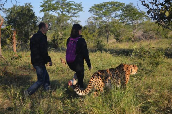 sylvester the cheetah