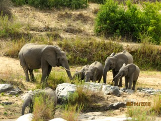 cooke_singita_elephants